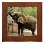 African Elephant 002 Framed Tile