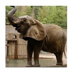 African Elephant 002 Tile Coaster
