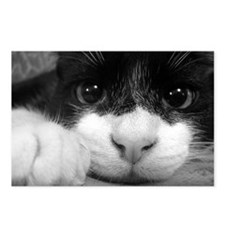 Black and White Cat Postcards (Package of 8)