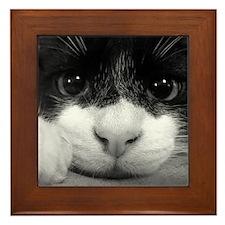 Black & White Cat Framed Tile