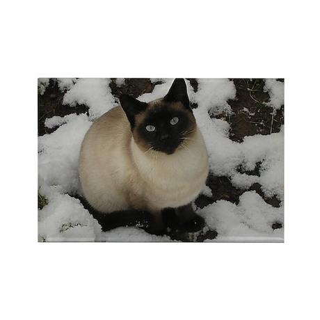 Siamese Snow Cat Rectangle Magnet