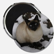 Siamese Snow Cat Magnet