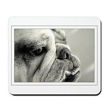 English Bulldog Closeup Mousepad