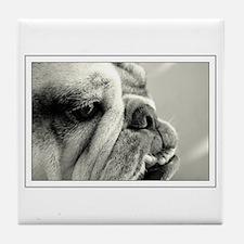 English Bulldog Closeup Tile Coaster