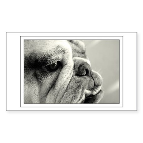 English Bulldog Closeup Rectangle Sticker