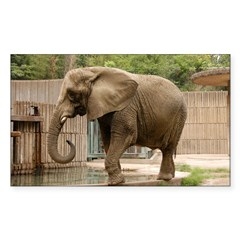 African Elephant 004 Rectangle Sticker 50 pk)