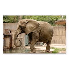 African Elephant 004 Rectangle Sticker 10 pk)
