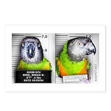 Cute Senegal Postcards (Package of 8)