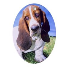 """Sad Bassethound"" - B1""  Oval Ornament"