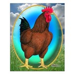 Broiler Opal Chicken Small Poster