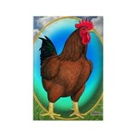 Broiler Opal Chicken Rectangle Magnet