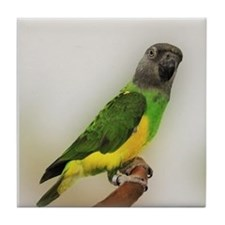 Senegal Parrot Coaster