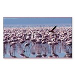 Flamingoes Rectangle Sticker 10 pk)