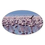 Flamingoes Oval Sticker (10 pk)