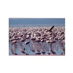 Flamingoes Rectangle Magnet (100 pack)
