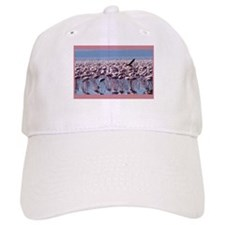 Flamingoes Baseball Cap