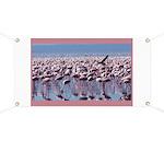 Flamingoes Banner