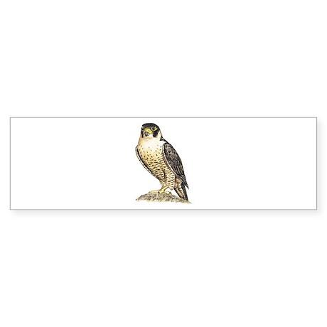 Peregrine Falcon Bumper Sticker