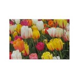 Tulips 10 Pack
