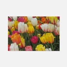 Spring Tulip Field Magnets