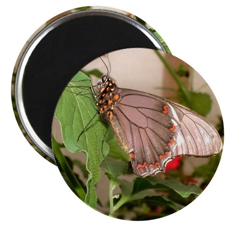 """Butterfly 2.25"""" Magnet (10 pack)"""