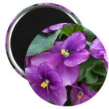 Beautiful Purple AV Field Magnet
