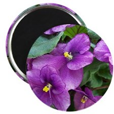 "Beautiful Purple AV Field 2.25"" Magnet (100 pack)"