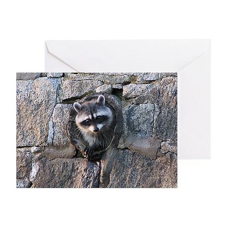 Raccoon in Culvert Greeting Cards (Pk of 10)