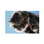 Kitty owns you Rectangle Magnet (100 pack)