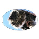Kitty owns you Oval Sticker