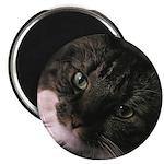 Figaro Closeup Magnet