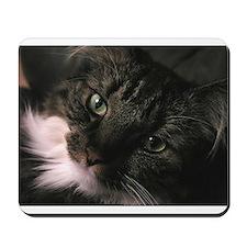 Figaro Closeup Mousepad