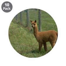 "Cool Alpacas 3.5"" Button (10 pack)"