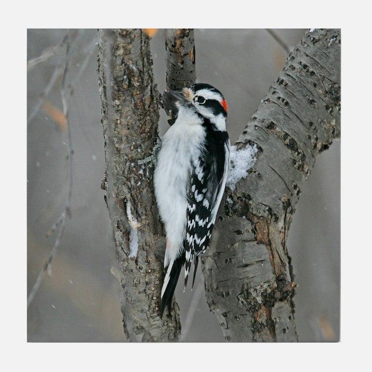Male Downy Woodpecker Tile Coaster