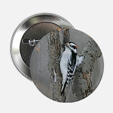 "Male Downy Woodpecker 2.25"" Button"