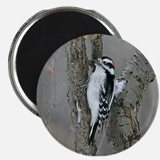 Male Downy Woodpecker Magnet