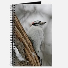 Downy Woodpecker Journal