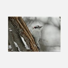 Downy Woodpecker Rectangle Magnet