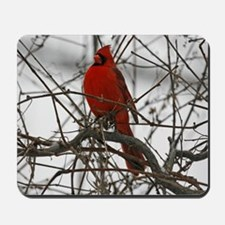 A Red Male Cardinal Mousepad