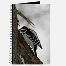 A Downy Woodpecker Journal