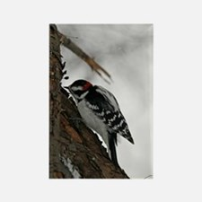 A Downy Woodpecker Rectangle Magnet