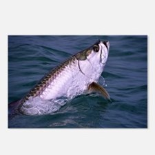 Funny Saltwater fishing Postcards (Package of 8)