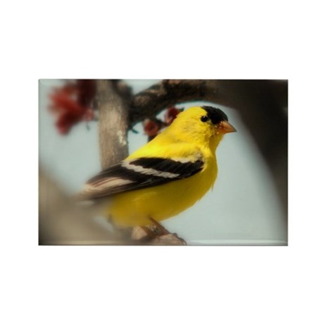 American Goldfinch Rectangle Magnet (100 pack)