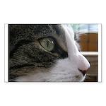 Sylvester in focus Rectangle Sticker