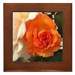 Orange Rose Framed Tile