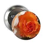 Orange Rose 2.25