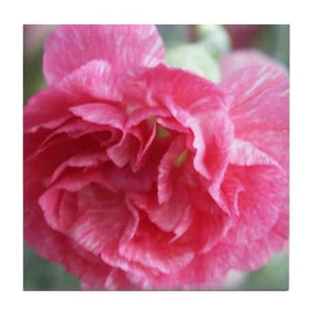 Pink Carnation Tile Coaster