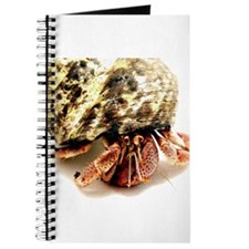 Hermit Crab Up Close and Pers Journal
