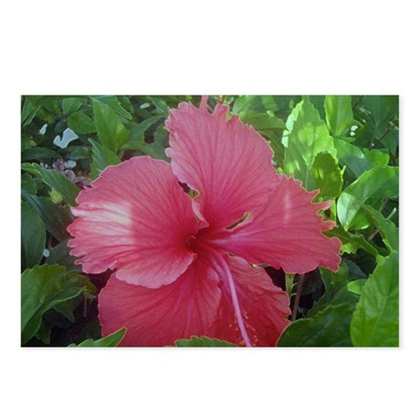 Pink Hibiscus Postcards (Package of 8)