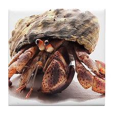 Hermit Crab Posing Tile Coaster
